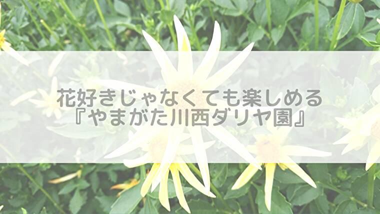 【ブログ】2019「やまがた川西ダリヤ園」花の見頃はいつ?ソフトクリーム(アイス)も実食