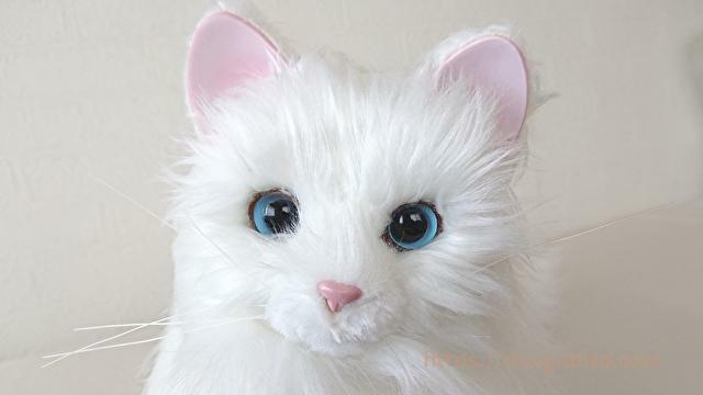 【あまえんぼうねこちゃん】40才女性が初めて猫を飼ってみた!【口コミ】